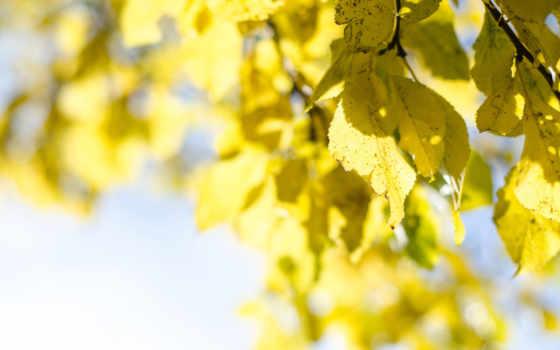 дерево, crown, листва, категории, осень, небо, яйцо, природой, желтая, ветки,