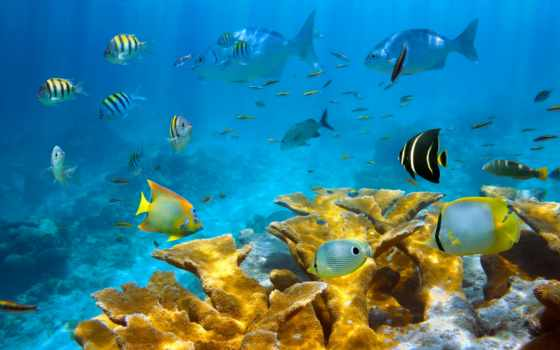 под, ocean, водой