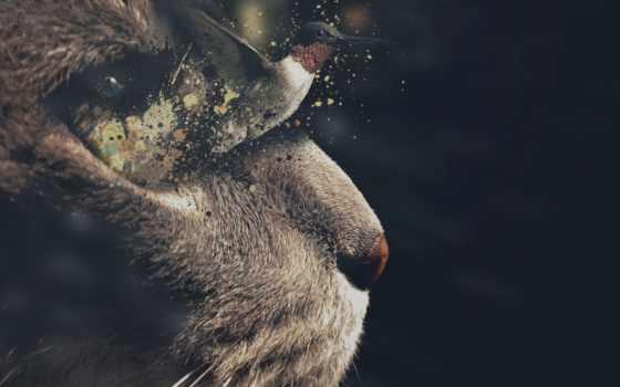 колибри, птичка, kotyara, кот, оптом, морда, полет, кошак, купить, картинка,