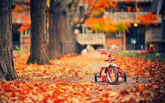 осень, золотая, осени, золотистый, города, когда, стих, time,