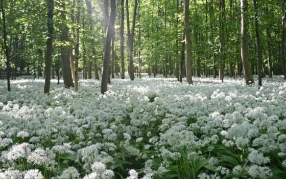 весна, природа, shirokoformatnyi