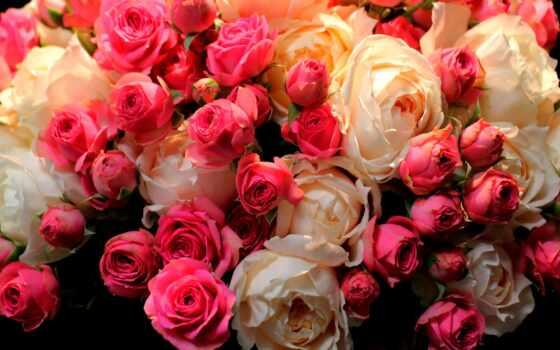 роза, праздник, букет, весна, весны, cvety, let, white