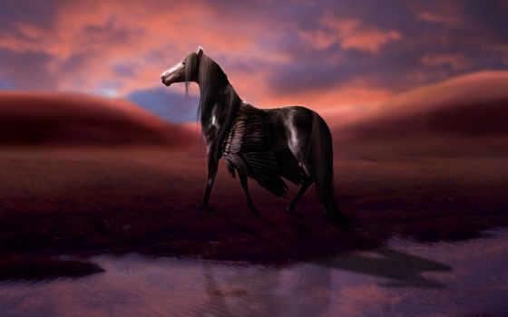 лошадь, пегас, пегас