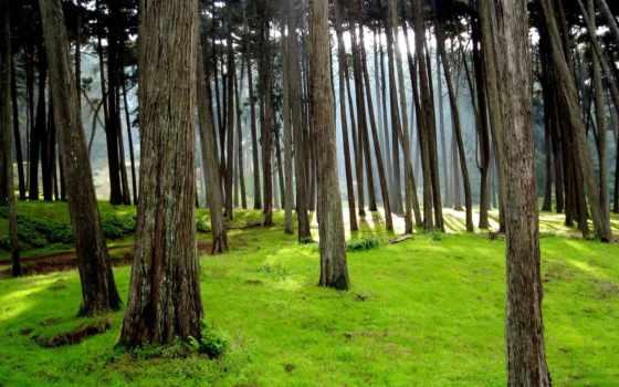 качества, природы, высокое, качественные, nevseoboi, хорошего, природа, имеет, большинство,