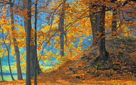 лес, природа, осень