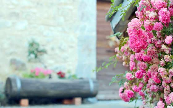 цветы, розовые, log, клумба, розы,
