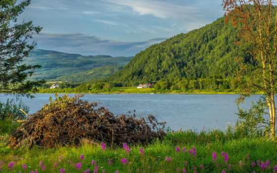 куча, ветки, trees, красивые, пейзажи -, цветет, трава, admin, дерево,