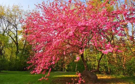 images, photos, страница, park, acacia, весна, gallery, zoa, bloom,