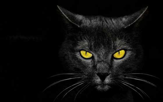 , кот, глаза, желтые, усы, черный