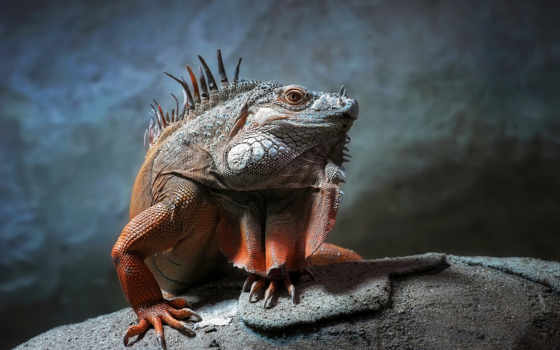 ящер, iguana, высоком, папоротник, черепаха, свет, нояб, jungle, ящерицы, качестве,