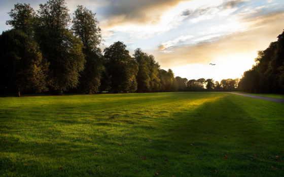 газон, закат, птицы, город, trees, природа, трава,