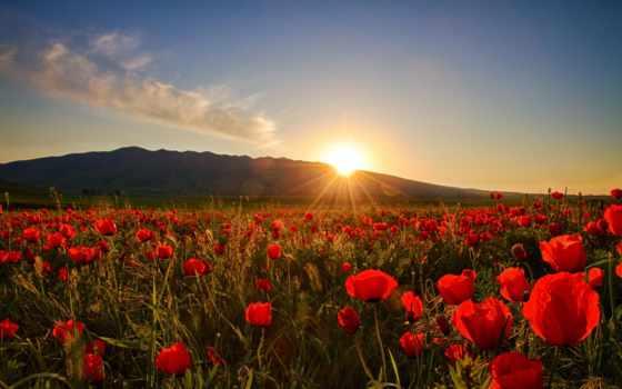 закат, рассвет, природа, cvety, маки, поле, sun,