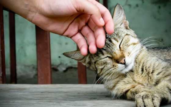 кот, lastitsya, home, full, get, animal, дар, комментарий