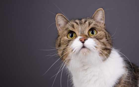 котенок, кот, portrait, лицо