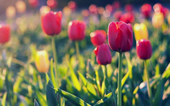 frase, тюльпан, поле, share, комментарий, card, абонент, company, subscribe