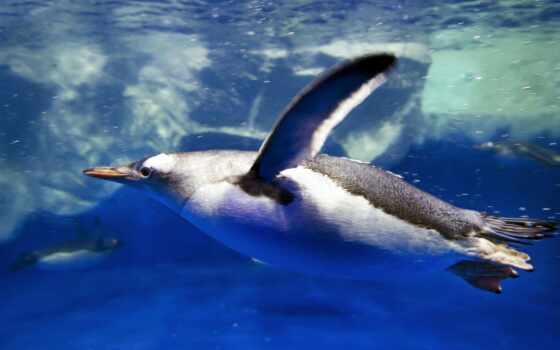 пингвин, вода, плывет,  глаз, marne, oceanworld, arctic, barewall,