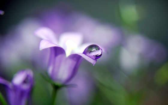bell, цветы, растительность