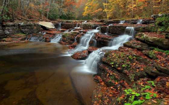 priroda, reka, les