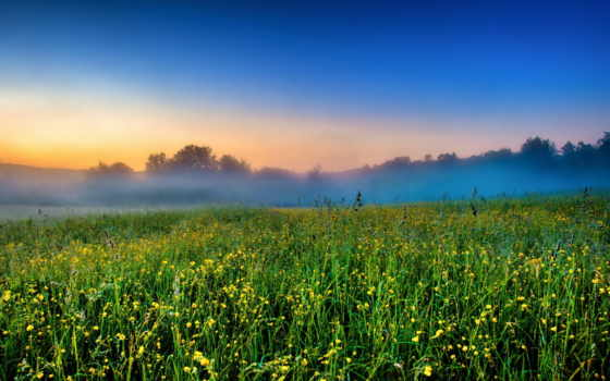 утро, туман, луг
