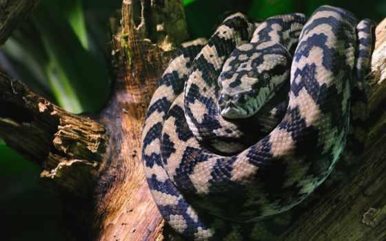 snake, jpeg, змеями