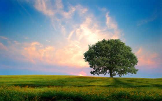 нота, дерево, закат