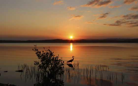 красивые, обойный, микс, sun, птица, озеро, que, сер, ми,