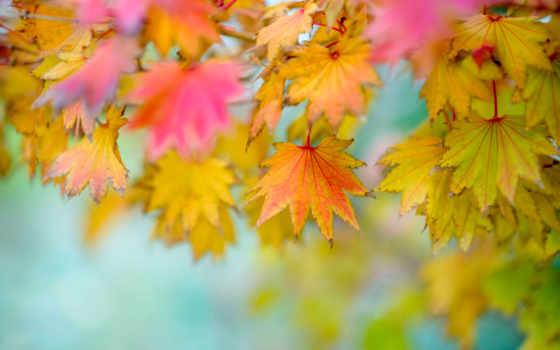 листва, осенние, осень, размытость, фотофон,