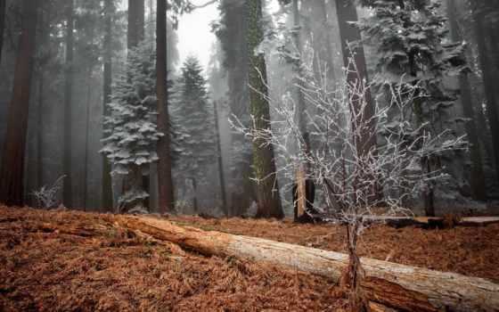 красивые, landscape, иней, пейзажи -, качестве, хорошем, winter, trees, изба, природа, пикабу,