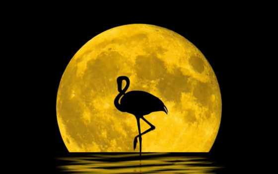 луна, full, ночь, ipad, rising, you, pinterest,