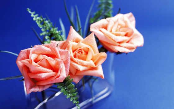 roses, lovely, роза
