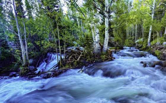 музыка, bosque, лес, azul, corriendo, río, views, pictures, del,