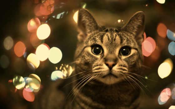 кот, full, бесплатные, быстро, possible, наши, взгляд,