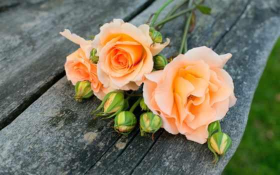 цветы, розы, широкоформатные, цветочки, нежные, зелёный, страница, широкоэкранные, gentle,