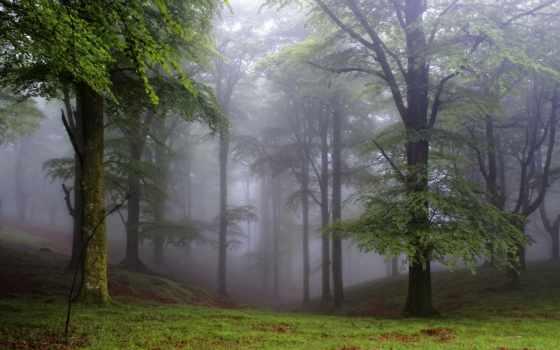 лес, поляна, trees, природа, туман, небо, страница,