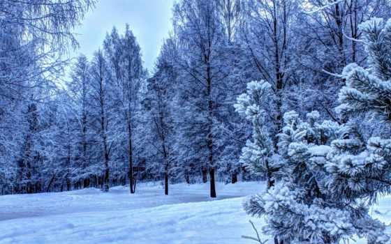 лес, winter, сумерки, зимние, trees, серо, голубые, снег,