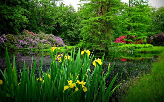 flowers, park, фон, garden, весна, trees,