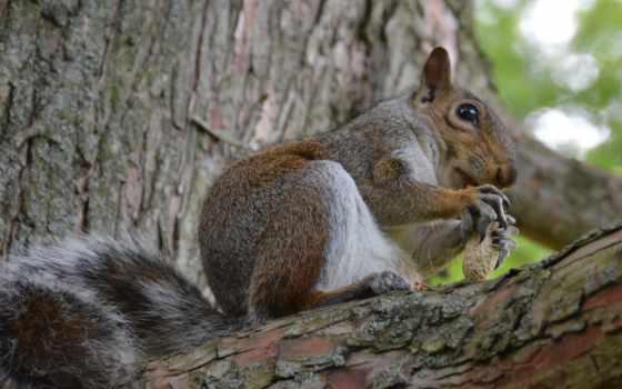 белки, nuts, you