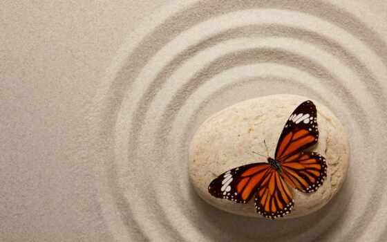 dznyi, камень, песок, красивый, garden, бабочка, free, фон