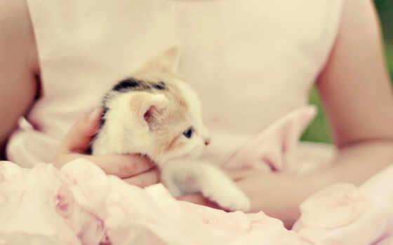 нежность, девушка, котенок, настроение, let