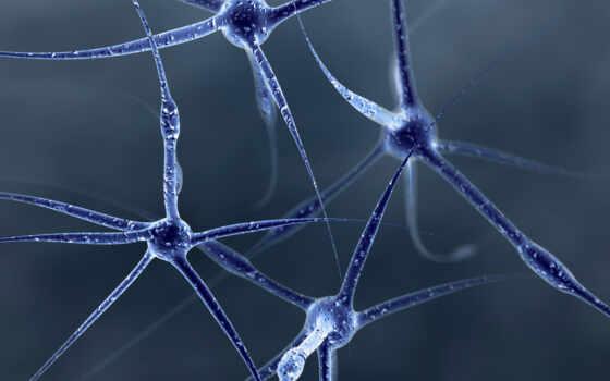 фото, нейроны