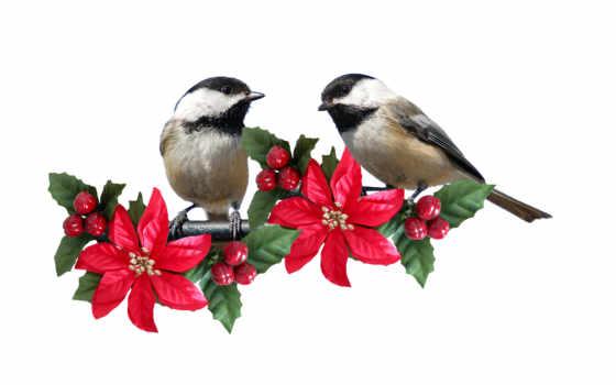 Экзотические goldfinch, птицы