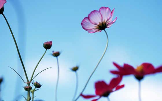 красивые, цветы, очень