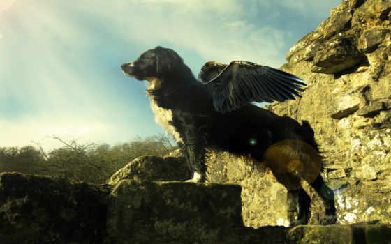 собака, крыльями, собаки
