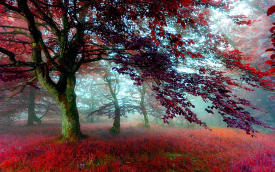 туман, лес, trees