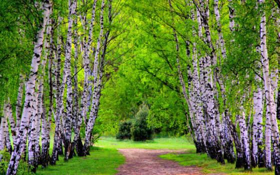 широкоформатные, весенние, часть, весна, liveinternet, разрешениях, природа, рощу, сквозь, разных,