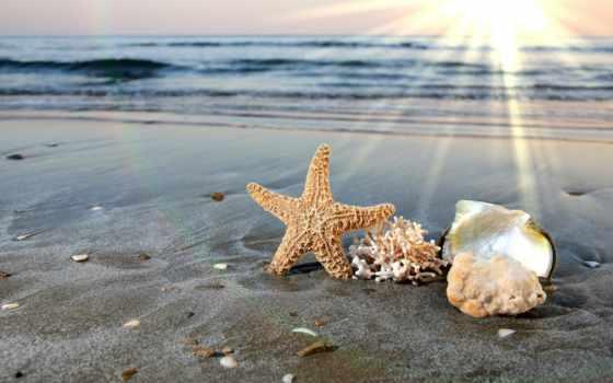shells, пляж, море, water, shell, песок, free,