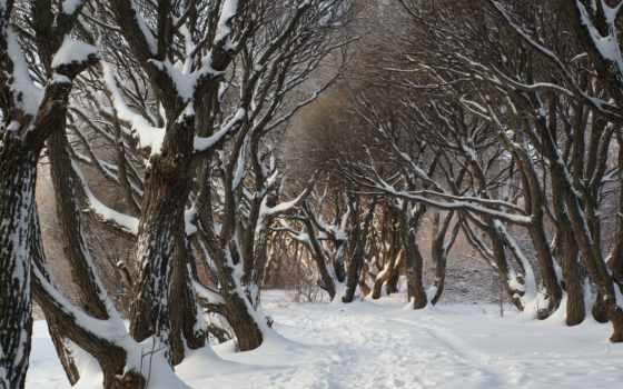 winter, качестве, хорошем, online, смотреть, лес, женщина, зимы, сниматься,