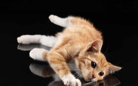 кот, red, кошки, пол, лежит, яndex, black, белые, лапки, морда, рыжие,