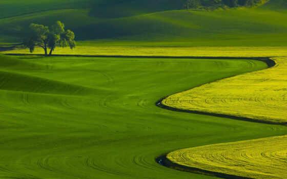 зелёный, landscape, summer, яndex, line, красивый, card, оттенок, color, поле