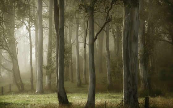 деревья, лето